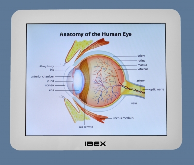 Eye Anatomy